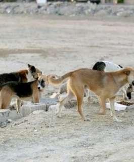فيديو يوثق لحظة هجوم كلاب ضالة على طفل في تبوك.. ومصادر تكشف التفاصيل