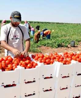 شروط تعجيزية على تصدير الخضروات من غزة الى الضفة